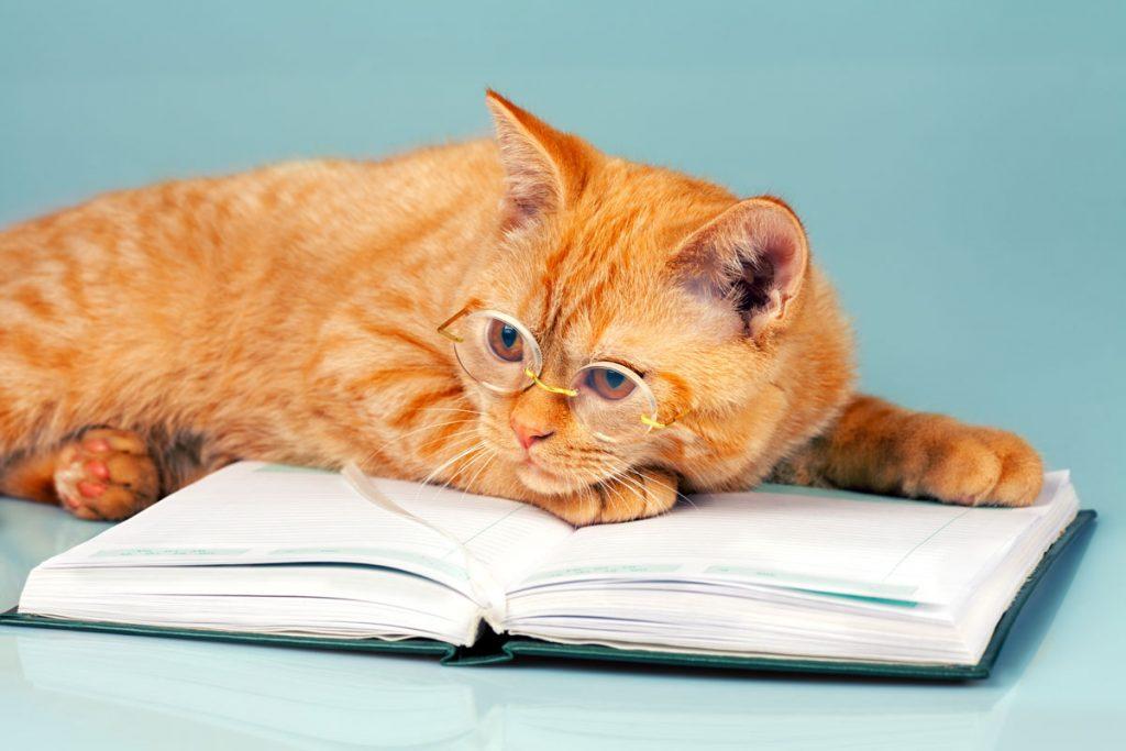 CAT koučing